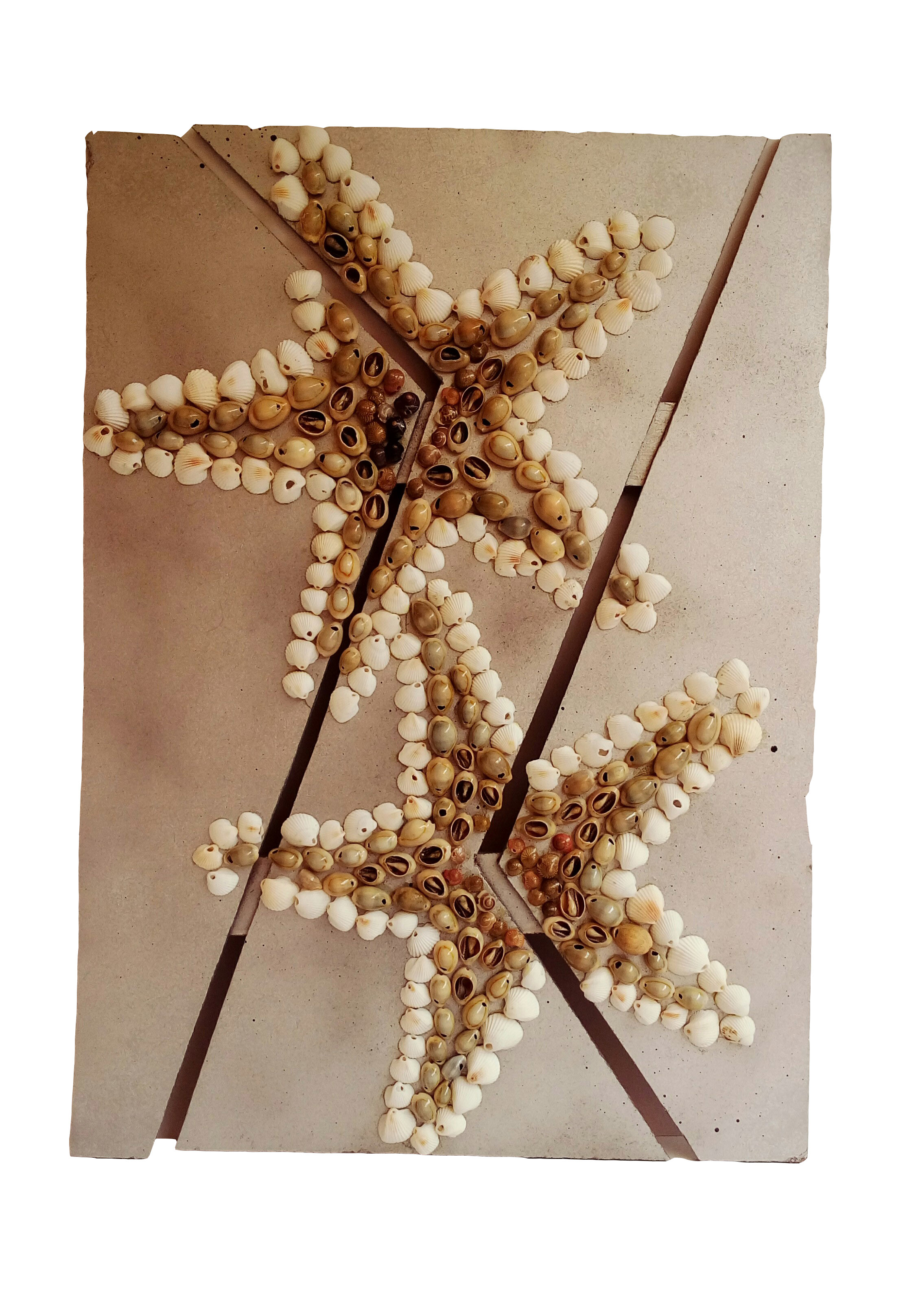 Buy Starfish Shell Wall Hanging At Lowest Price
